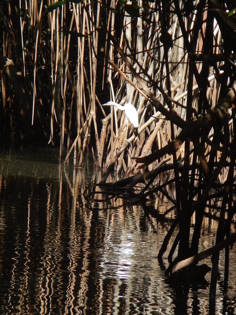 Stealthy Egret