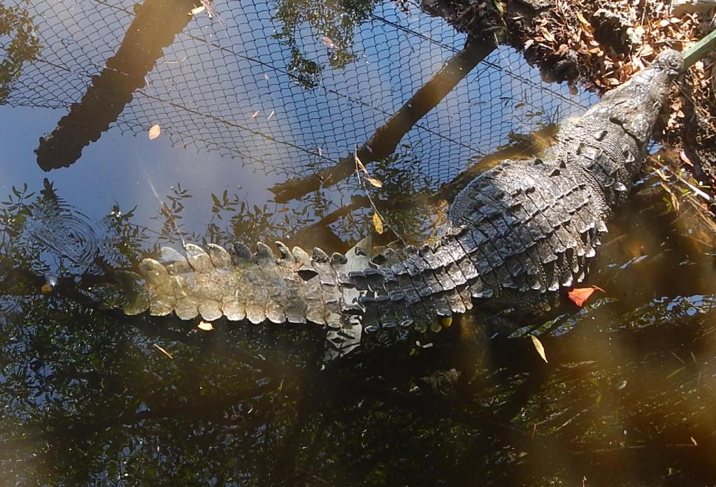 Crocodile Preserve