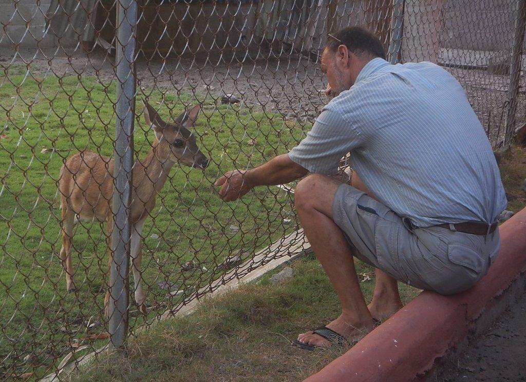 Feeding Bambi