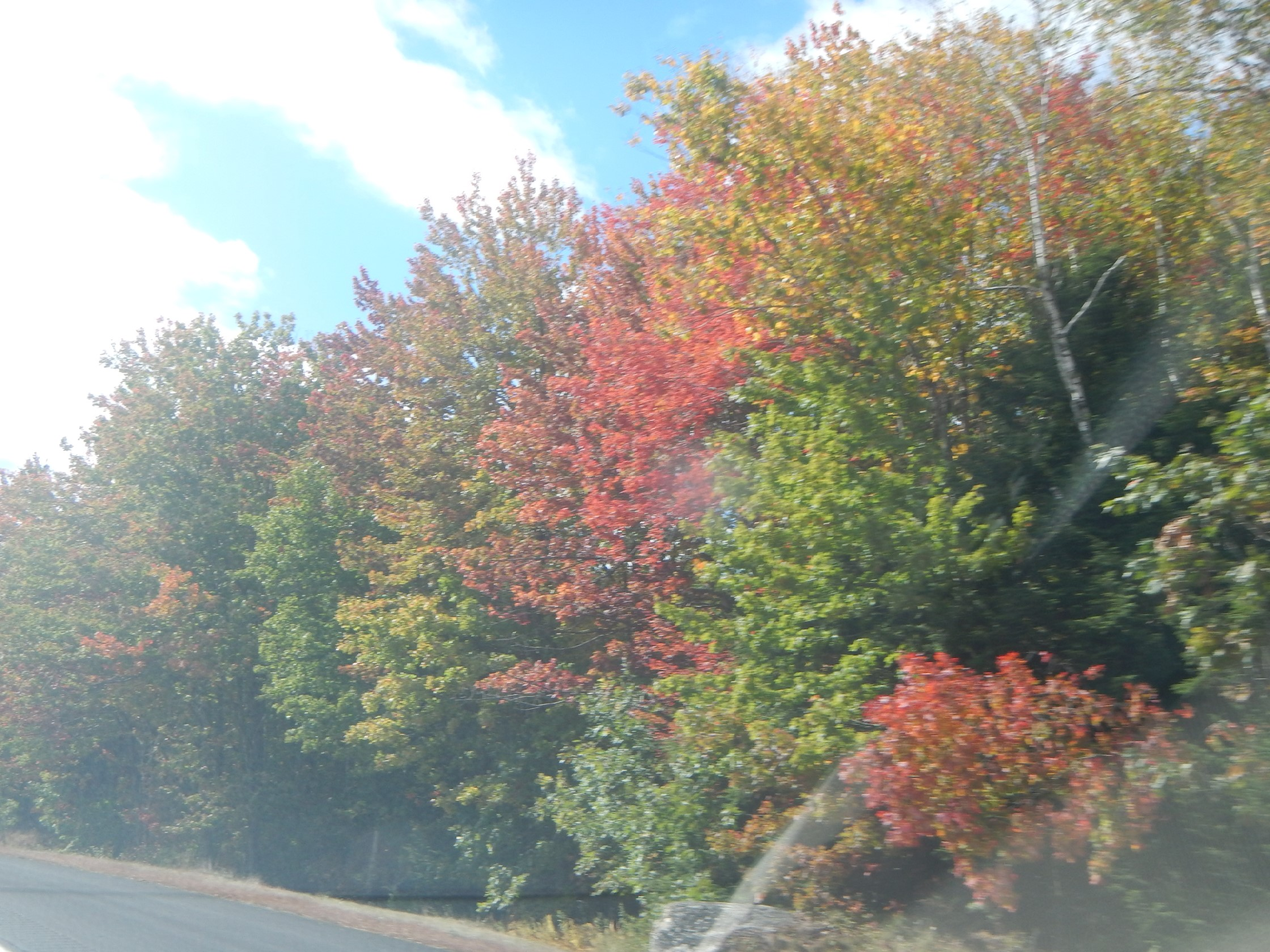 Highway Fall Color