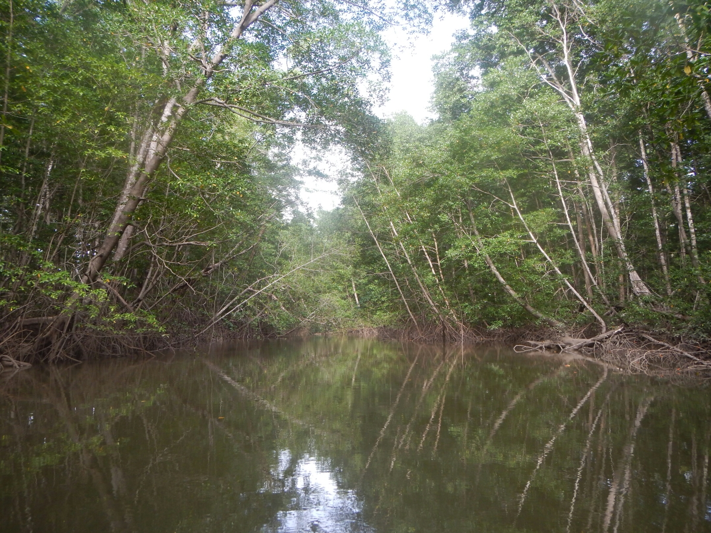 Mangroves of Montijo