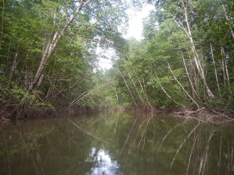 Mangroves of Montijo